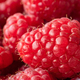 Close up of beautiful selection of freshly picked red raspberries - PhotoDune Item for Sale
