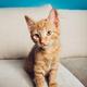 Cute ginger kitten sits - PhotoDune Item for Sale