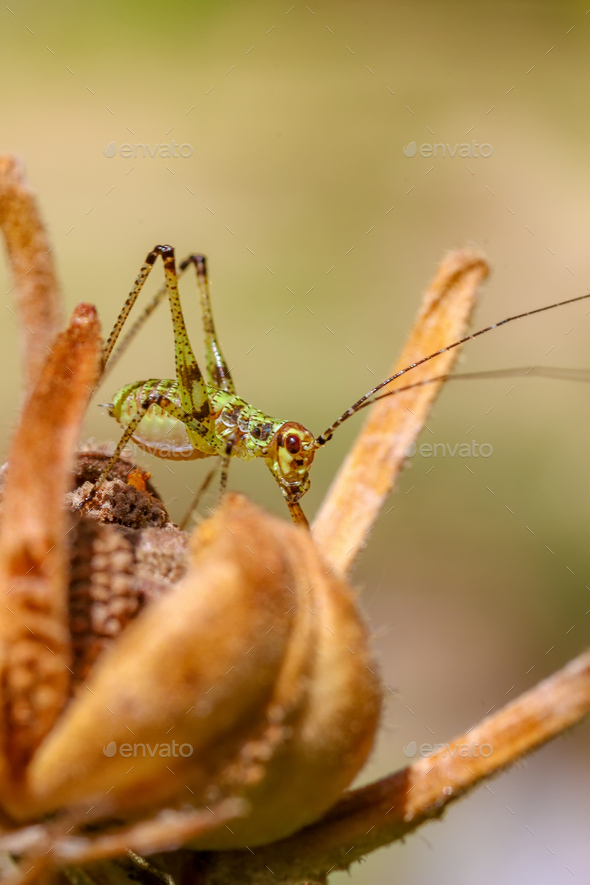 grasshopper - Stock Photo - Images
