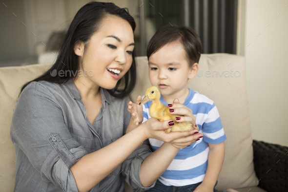 Smiling woman holding a yellow duckling in her hands, her young son watching. - Stock Photo - Images