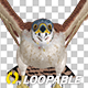 American Kestrel - Flying Loop - Front View - VideoHive Item for Sale
