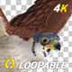 American Kestrel - 4K Flying Loop - Side Angle - VideoHive Item for Sale