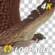merican Kestrel - 4K Flying Loop - Back Angle - VideoHive Item for Sale