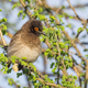 African Red-Eyed Bulbul - PhotoDune Item for Sale