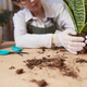 Young Woman Potting Houseplants Closeup - PhotoDune Item for Sale