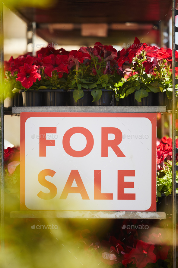 Flowers For Sale - Stock Photo - Images