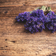 Fresh flowers of lavender - PhotoDune Item for Sale