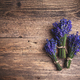 Fresh lavender flowers - PhotoDune Item for Sale