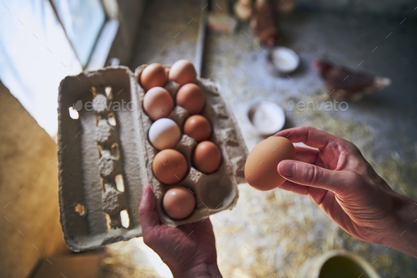 Eggs from small organic farm - Stock Photo - Images