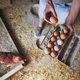 Eggs from small organic farm - PhotoDune Item for Sale