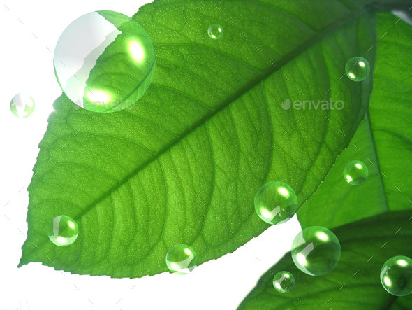 green lemon leaf with abstract air bubbles - Stock Photo - Images