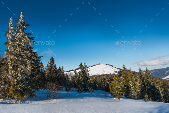 Mesmerizing positive landscape of tall slender fir - Stock Photo - Images