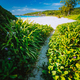 Hiking path overgrown with green plants leading to beautiful grand anse beach at La Digue island - PhotoDune Item for Sale