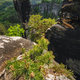 Mountain top in famous Bastei rock formation of national park Saxon Switzerland, Germany. Pine tree - PhotoDune Item for Sale