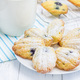 Sugar powdered madeleines with blueberries - PhotoDune Item for Sale