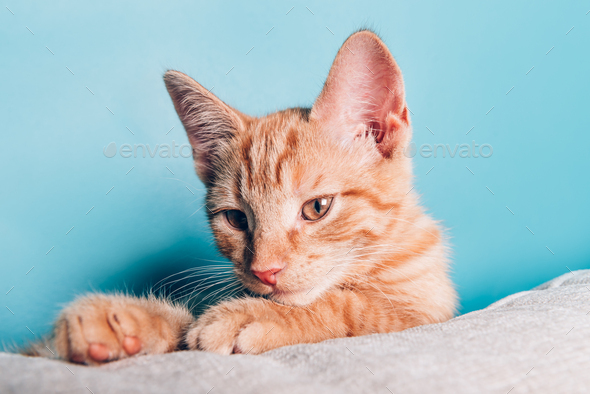 Cute ginger kitten sits - Stock Photo - Images