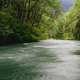 Dosewallips River and lush, green temperate rainforest, Olympic NP - PhotoDune Item for Sale