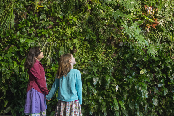 Two children holding hands and looking up at a wall covered with growing foliage in a city park - Stock Photo - Images