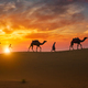 Indian cameleers camel driver with camel silhouettes in dunes on sunset. Jaisalmer, Rajasthan, India - PhotoDune Item for Sale