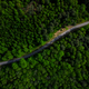 Winding Road in Pine Forest At Spring. Aerial Drone Top Down View - PhotoDune Item for Sale
