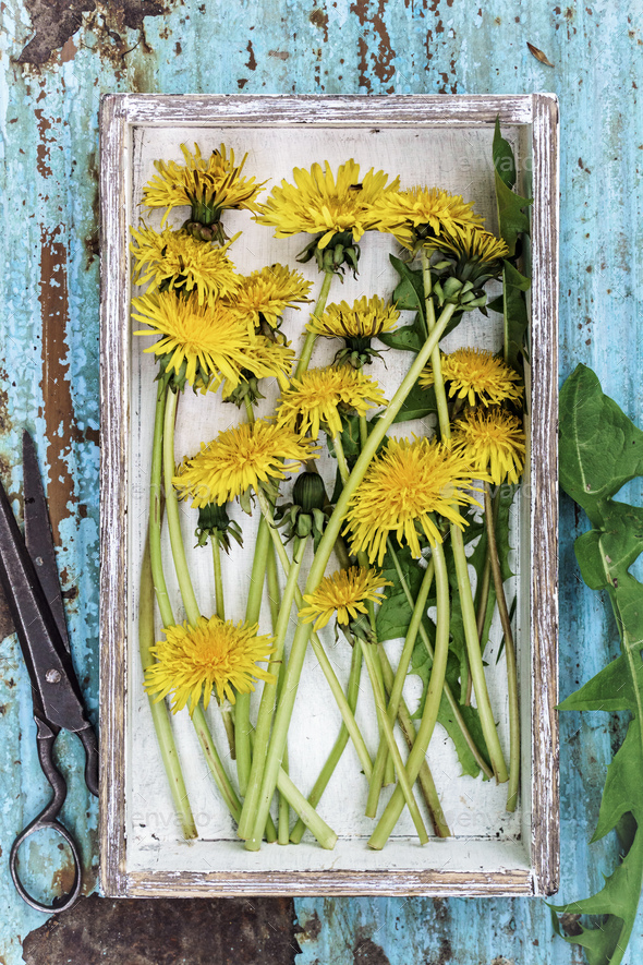 Picked dandelions flowers in box - Stock Photo - Images