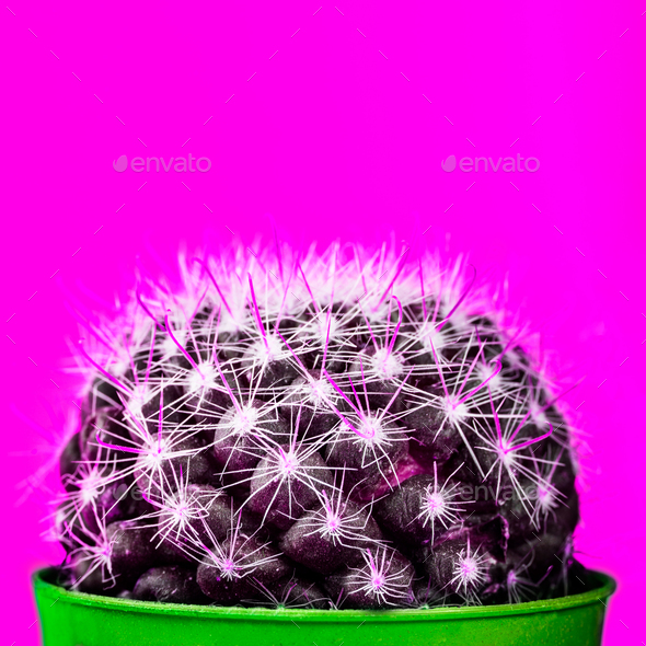 Tiny Cactus in the Pot on Bright Neon Background. Saturated Imag - Stock Photo - Images