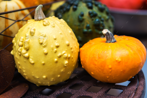 colorful ornamental pumpkins, gourds and squashes in the market - Stock Photo - Images