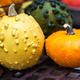 colorful ornamental pumpkins, gourds and squashes in the market - PhotoDune Item for Sale