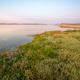 Dune ecosystem vegetation tolerant to salt spray strong winds and sand - PhotoDune Item for Sale