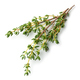 fresh thyme on white background - PhotoDune Item for Sale