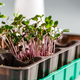 Differend types of Microgreens - PhotoDune Item for Sale
