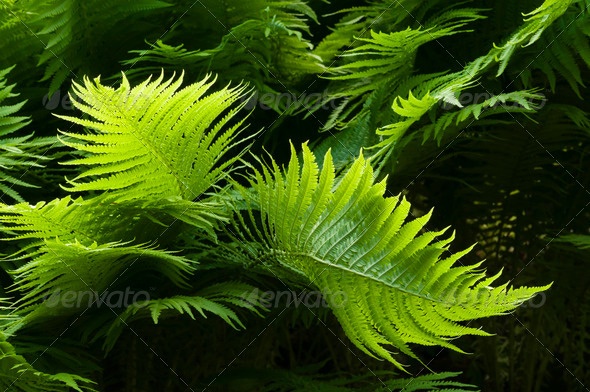 green fern leaves - Stock Photo - Images