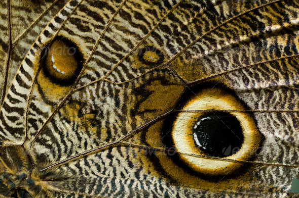 Close up of butterfly wing - Stock Photo - Images