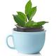 new ficus plant - PhotoDune Item for Sale