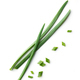 green onion on white background - PhotoDune Item for Sale