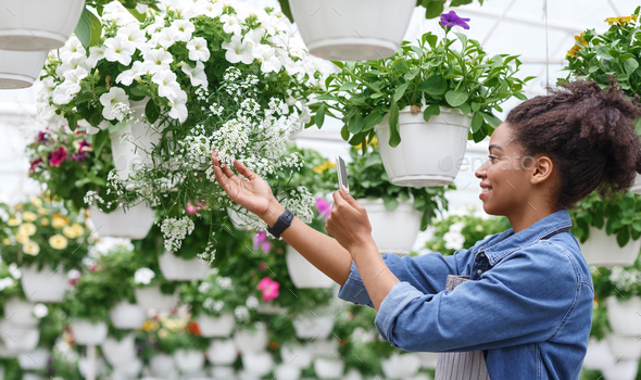 Comfortable work with smart technologies. Woman care and takes photos of flowers in greenhouse - Stock Photo - Images