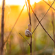 Snail in the grass at spring dawn - PhotoDune Item for Sale