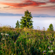 Misty dawn in the mountains. Beautiful summer Landscape - PhotoDune Item for Sale
