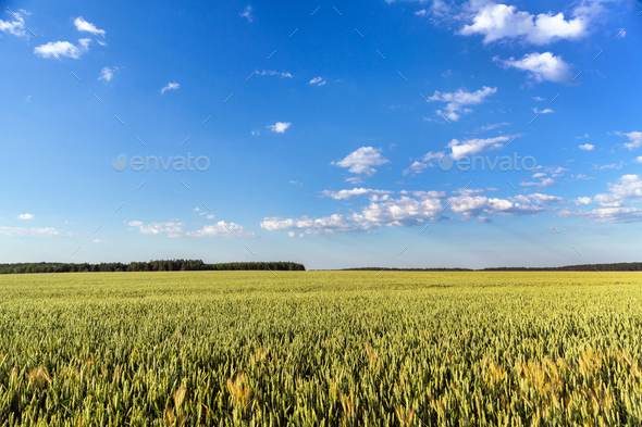 Countryside landscape on sunny day - Stock Photo - Images