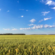 Countryside landscape on sunny day - PhotoDune Item for Sale