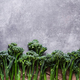 Row of Broccolini on Stone Background. - PhotoDune Item for Sale