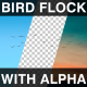 Flying Bird Flock - VideoHive Item for Sale