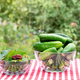 Procurement of ingredients for the preservation of cucumbers - PhotoDune Item for Sale