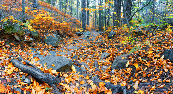 Rocky path strewn with leaves in autumn forest - Stock Photo - Images