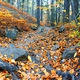 Rocky path strewn with leaves in autumn forest - PhotoDune Item for Sale