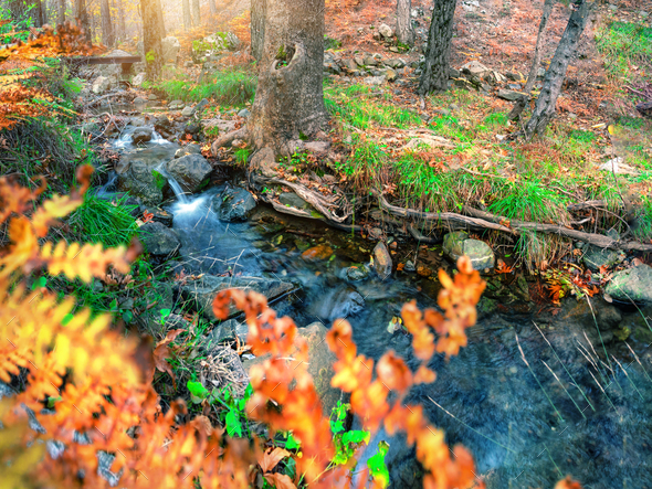 Roll on the mountain river in the autumn forest - Stock Photo - Images