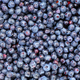 Freshly picked wild blueberry - PhotoDune Item for Sale