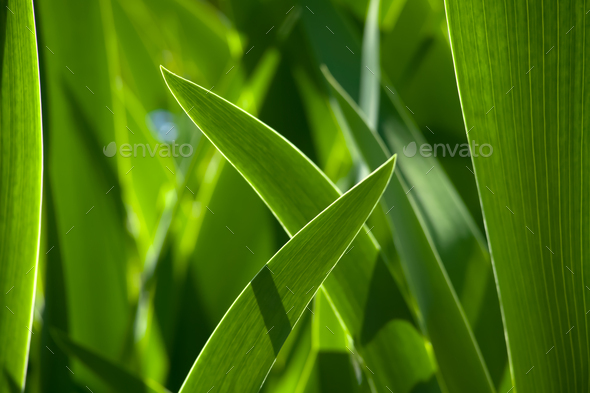 Green grass in background of bright sunlight from the back - Stock Photo - Images