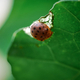 Close-up view of a ladybird on plant - PhotoDune Item for Sale