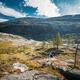 Kinsarvik, Hordaland, Norway. Young Woman Lady Tourist Traveler Backpacker Hiking In Hardangervidda - PhotoDune Item for Sale